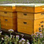Pályázat méhészeti beruházásokra Vajdaság AT területén a 2021-es évben